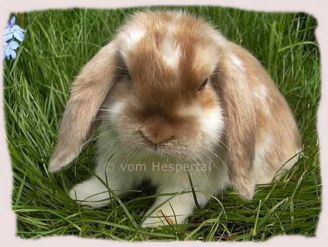 kaninchen kaufen duisburg
